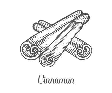 spicy plant: Cinnamon stick seed plant . Hand drawn sketch vector illustration isolated on white. Spicy herbs. Cinnamon Doodle design cooking ingredient for food, dessert. Seasoning spice herb. Illustration