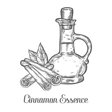 Cinnamon essence oil bottle seed vector. Isolated on white background. Cinnamon food ingredient. Engraved hand drawn illustration in retro vintage style. Organic Food, cosmetics, treatment component.