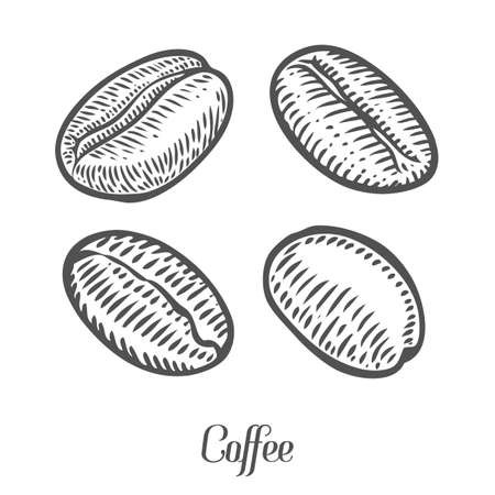 coffe beans: Coffee beans, berry, fruit, seed. Natural organic caffeine. Green coffee, luwak. Black on white background. Hand drawn sketch vector illustration coffe.