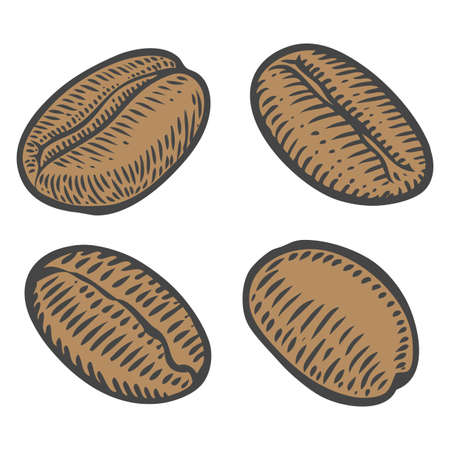 coffe beans: Coffee beans, berry, fruit, seed. Natural organic caffeine. Green coffee, luwak. on white background. Hand drawn sketch vector illustration coffe.