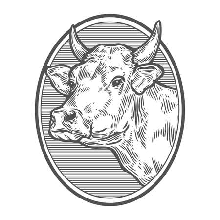 Cows head portrait. Hand drawn sketch in a graphic style. Vintage vector engraving illustration for poster, web. Isolated on white background