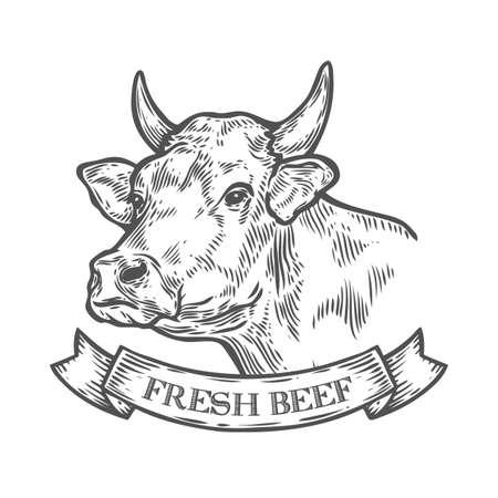 Cabeza de vaca, Carne fresca de carne orgánica. Bosquejo dibujado mano en un estilo gráfico. Ilustración del grabado del vector de la vendimia con la cinta para el cartel, tela. Aislados en fondo blanco