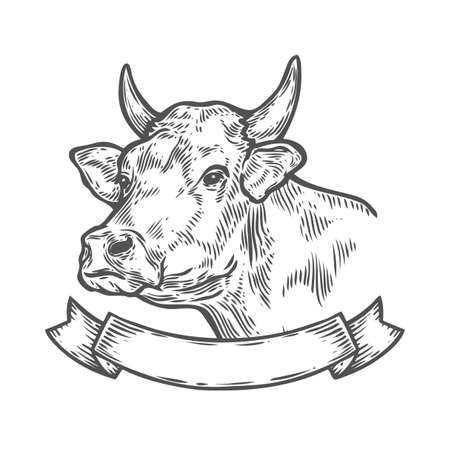 Cow head, Fresh beef organic meat. Hand drawn sketch in a graphic style. Vintage vector engraving illustration with ribbon for poster, web. Isolated on white background