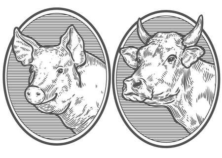 Koe en varken hoofd. Hand getrokken schets in een grafische stijl. Vintage vector gravure illustratie voor poster, web. Geïsoleerd op witte achtergrond