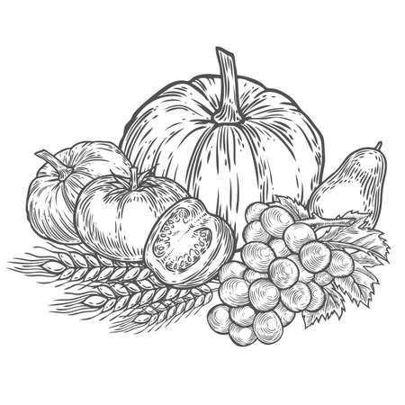 pumpkin tomato: Farmers market badge. Monochrome vintage engraving fresh organic vegetables, wheat and fruits sign isolated on white background. Sketch vector hand drawn illustration. Pumpkin, tomato, grape,avocado