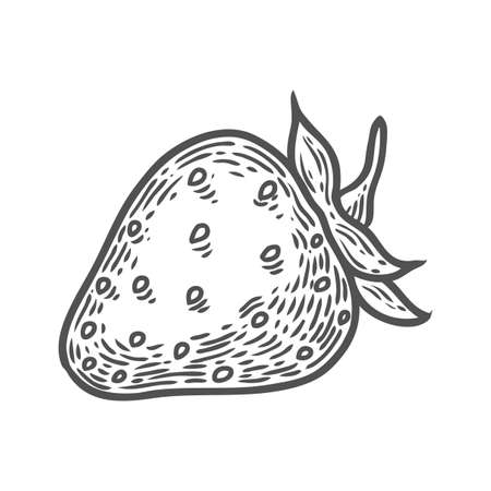 Strawberry fruit. Superfood organic berry. Hand drawn vector sketch engraved illustration. Black strawberry isolated on white background
