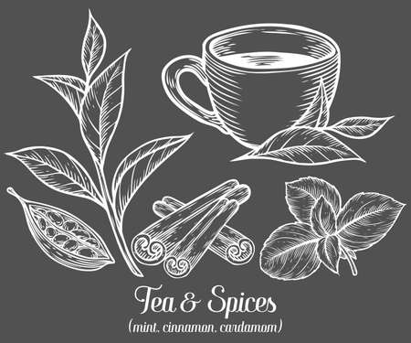 Green black herbal tea plant, leaf with spices cardamom, cinnamon, mint. Hand drawn sketch vector illustration. Floral branch organic lineart. African, indian, chinese tea, hot drink. White leaf on black background.