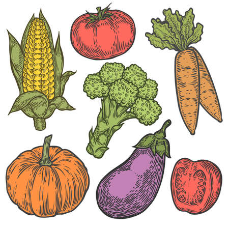 pumpkin tomato: Farmers market badge. Monochrome vintage engraving organic vegetables, wheat and fruits sign isolated on white. Sketch vector hand drawn illustration. Pumpkin, tomato, broccoli, corn, eggplant, carrot