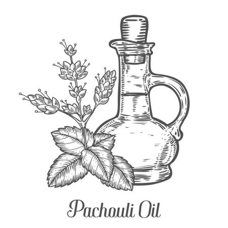 inhalation: Patchouli oil bottle seed vector. Isolated on white background. Patchouli essence aroma ingredient. Engraved hand drawn illustration in retro vintage style. Organic Aromatherapy, cosmetics, treatment component. Illustration