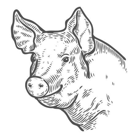 Varkenshoofd. Handgetekende schets in een grafische stijl. Vintage vector gravure illustratie met lint voor poster, web. Geïsoleerd op een witte achtergrond