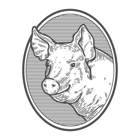 Pig head. Hand drawn sketch in a graphic style. Vintage vector engraving illustration with ribbon for poster, web. Isolated on white background