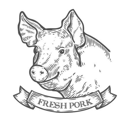 Pig head, Fresh pork organic meat. Hand drawn sketch in a graphic style. Vintage vector engraving illustration with ribbon for poster, web. Isolated on white background
