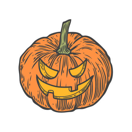 Pumpkin. Natural organic hand drawn vector sketch engraved illustration. Autumn vegetable, berry Isolated on white background