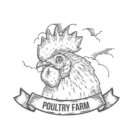 poultry farm: Hand drawn rooster Poultry farm emblem with ribbon. Cock head vector illustration. Farm animals, Vintage engraving style. Sketch chicken portrait isolated on white background. Symbol of new year 2017