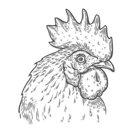 Hand drawn rooster cock head vector illustration. Farm animals, Vintage engraving style. Sketch chicken portrait isolated on white background. Symbol of new year 2017 Иллюстрация