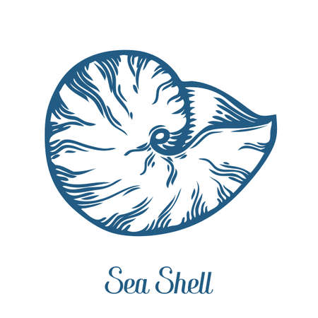 Seashell, sea shell, nature ocean aquatic underwater vector. Hand drawn marine engraving illustration on white background