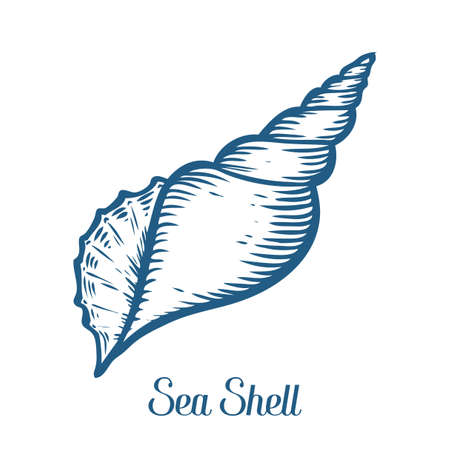 Seashell, sea shell, nature ocean aquatic underwater vector. Hand drawn marine engraving illustration on white background Фото со стока - 68407919