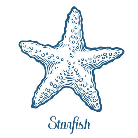 Starfish nature ocean aquatic underwater vector. Hand drawn marine engraving star fish illustration on white background Фото со стока - 68407925