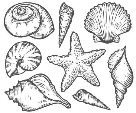 Seashell, sea shell, starfish nature ocean aquatic underwater vector set. Hand drawn marine engraving illustration on white background Иллюстрация