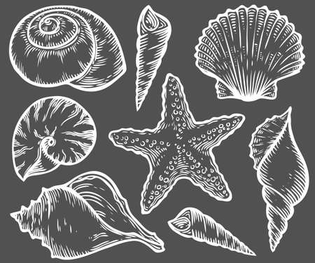 Seashell, sea shell, starfish nature ocean aquatic underwater vector set. Hand drawn marine engraving illustration on black background