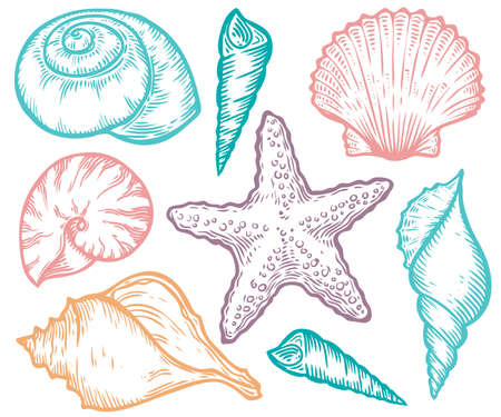 Seashell, sea shell, starfish nature ocean aquatic underwater vector set. Hand drawn marine engraving colorful illustration on white background