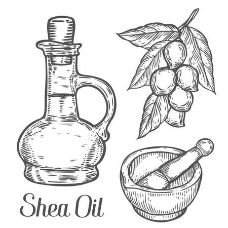 treatment plant: Shea oil bottle nuts plant, berry, fruit natural organic butter ingredient. Hand drawn vector sketch engraved illustration. Black Shea nuts isolated on white. Treatment, care, food ingredient Illustration