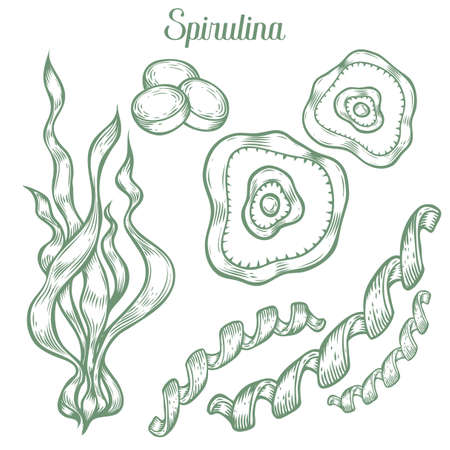 dietary: Spirulina superfood organic healthy dietary supplement. Hand drawn sketch vector illustration isolated on white background. Algae spirulina healthy ingredient for bioactive compounds and pills