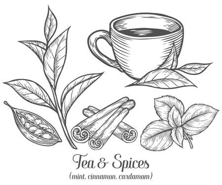 Green black herbal tea plant, leaf with spices cardamom, cinnamon, mint. Hand drawn sketch vector illustration. Floral branch organic lineart. African, indian, chinese tea, hot drink. Black leaf on white background.