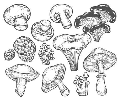 champignon: Mushroom hand drawn sketch vector illustration. Mushroom shiitake, truffle, chanterelle, champignon, enokitake, honey agaric, oyster mushroom, fresh organic food isolated on white.