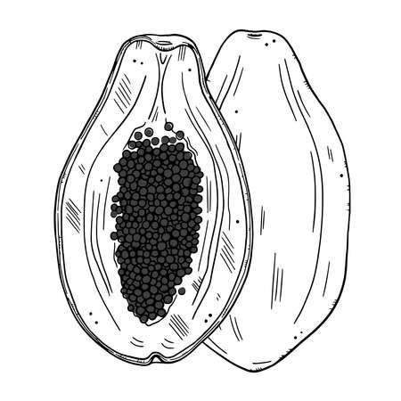 Papaya fruit illustration. Whole and half of the fruit isolated on a white background. Doodle style black outline ..