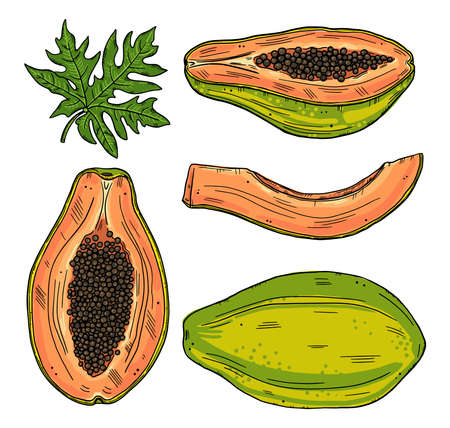 A set of papaya fruits in various forms. Whole and sliced fruit with leaves on a white background. Color doodle style ..