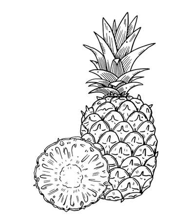 Composition of a whole pineapple and a half cut of fruit on a background. Black outline image on a white background. Doodle style ..