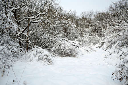 Winter landscape in the forest, city, park.