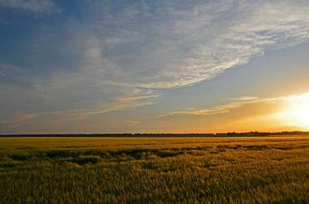 Sunset in the countryside. Korolevka - village, Nikolaevsky village council, Novomoskovsk district, Dnipropetrovsk region, Ukraine. 版權商用圖片