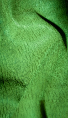 Green close up textured background photo