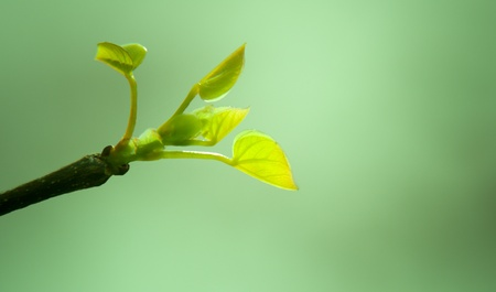 plant seed: Green leaves close up growing from a tree with a green background Stock Photo