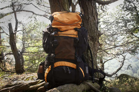 appalachian trail: An orange backpack leaning on a tree in the woods
