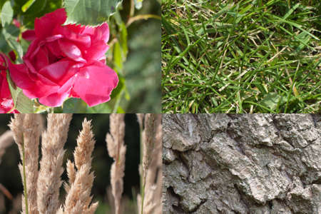 A red rose,green grass,tree bark and weeds each displayed  in a corner Stock Photo - 14389061