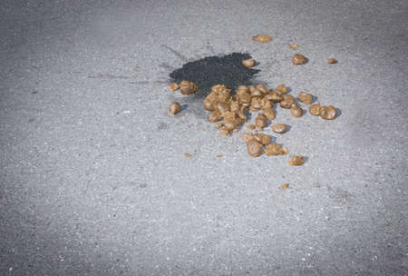 shit: Horse poop on the road Stock Photo