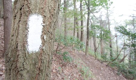 A white blaze in the woods on the Appalachian Trail. Pennsylvania Stock Photo
