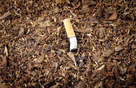 A smashed cigarette on top of tobacco