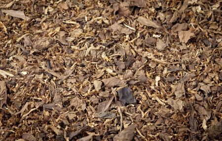 Tobacco pile Stock Photo