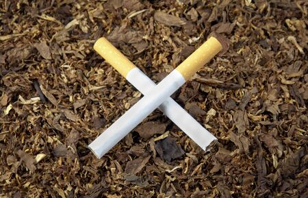 crossed cigarette: Two cigarettes crossed on tobacco