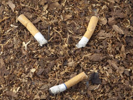 Three smashed cigarettes on top of tobacco Stock Photo