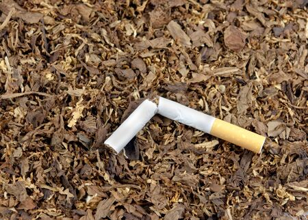 A broken cigarette on top of tobacco