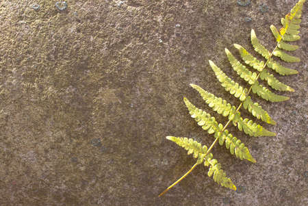 A fern in the sunshine on top of a big rock Stock Photo