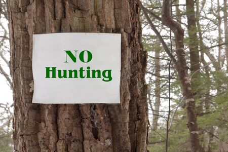 A green no hunting sign in a tree out in the woods Stock Photo - 17120643