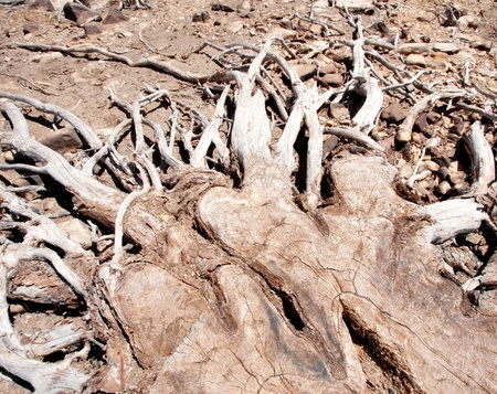 Driftwood branches reaching out on the ground