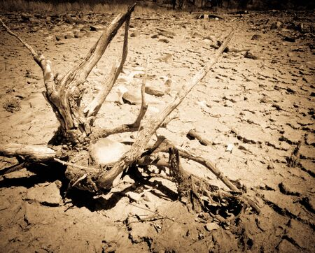 A piece of driftwood sitting in the dried out mud Stock Photo