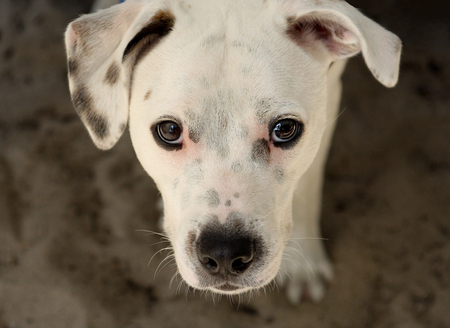 A white dog looking up Stock Photo